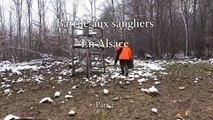 Chasse au sanglier,Battue aux sangliers en Alsace (Part 2)  Wild boar hunt, Beaten with wild boars in Alsace (Part 2)