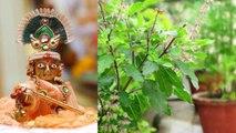 जन्माष्टमी पर तुलसी की पूजा कर देगी मालामाल | Janmashtami Tulsi pooja | Boldsky