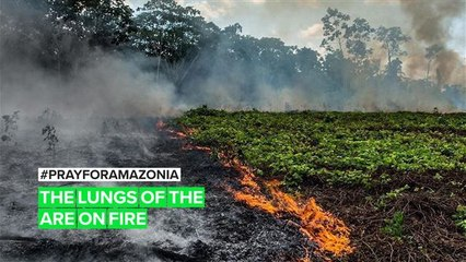 The Amazon fires are more terrifying with Bolsonaro in power