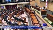 Controversia por uso de cannabis en Panamá - Nex Noticias