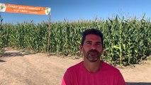 On a testé le labyrinthe de maïs