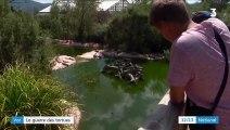 Var : les tortues de Floride deviennent un vrai fléau