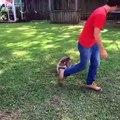 Adorable ! Ce raton-laveur essaie de sauter sur son papa.
