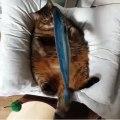 Ce chat fait des câlins à un poisson. Surprenant !