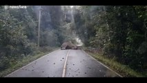 Cet éléphant endormi bloque la route en Thaïlande !