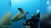 Cette tortue mange les bulles d'air d'un plongeur !
