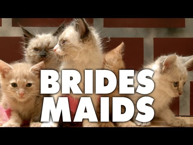 Bridesmaids (Cute Kitten Version)