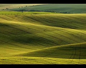 FROM TUSCANY, FROM MORAVIAN SLOVAKIA OR FROM OFF PALOUSE ?