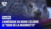 """L'Amérique du Nord a honoré l'ancienne tradition du """"Jour de la marmotte"""" ce dimanche"""