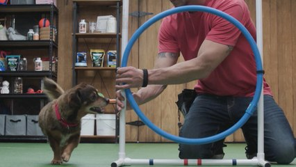 Lucky Dog - Hoops