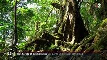 Des forêts et des hommes : en Inde, les ponts vivants de Meghalaya