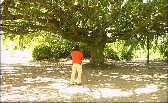 Le Hêtre de Bayeux  (Sous un arbre...)