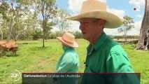 Déforestation : le fléau de l'Australie
