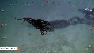 Sea Creature Looks Like Nightmarish Spider