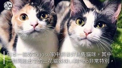 CollectionVideo-petmao_curation-petsmao.nownews-copy2-PetsMaoParser-2020/02/04-09:30