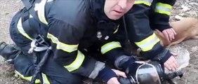Roumanie : Des pompiers sauvent deux chiens et un chat !