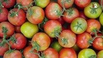 Alimentation : les tomates menacées par un virus