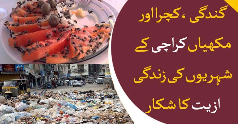Dirt, litter and flies creating difficulties for Karachiites
