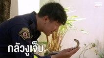 จนท.ดับเพลิงจับงูมือเปล่า เพราะกลัวงูได้รับบาดเจ็บ