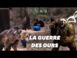 Un chasseur filme deux ours se battant pour défendre leur ourson