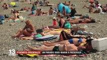 Méditerranée : la réserve de Banyuls, refuge sous-marin pour des centaines d'espèces
