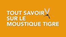 Tout savoir sur le moustique tigre
