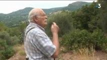 Sécheresse : la récolte d'olives impactée