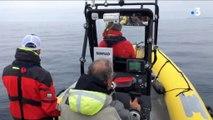 Biodiversité : des chercheurs à la poursuite des baleines pour mieux les comprendre