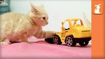 Fuzzy Kittens Bounce Around Tiny Truck - Kitten Love