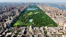 Toxic Algae Found In New York City Parks