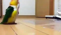When parrots start to play music. Spectacular!