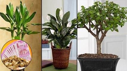Magical Indoor Plants To Attract Love, Joy And Prosperity    ఈ మొక్కలు మీరు ఇంట్లో పెంచారో!!
