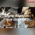 Disparitions de chats : que dit la loi ?