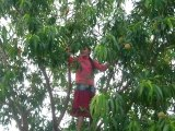 Comment grimper aux arbres