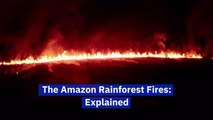 The Story Of The Amazon Fires