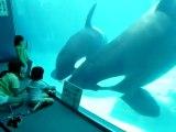 Ces 2 orques ont vraiment envie de jouer avec ces peluches orques