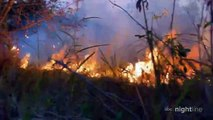 Amazon rainforest on fire: 'Lungs of the world' in flames