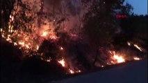 Bursa jandarmanın dikkati sayesinde orman yangını büyümeden söndürüldü