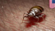 Bed bug army completely takes over house in Maryland