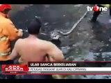 Petugas Tangkap Ular Sanca di Kali Cipinang
