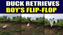 Determined duck retrieves boy's flip-flop, video viral