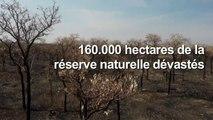 Les incendies dévastent une réserve naturelle de Bolivie