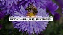 500 millions d'abeilles sont mortes à cause des pesticides au Brésil en seulement trois mois