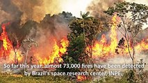Amazon Rainforest Fires - Who Started the Fire-