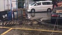 Ces pompiers malaisiens tentent de maitriser un énorme crocodile.