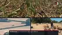 Sécheresse : la solidarité des agriculteurs face à la pénurie de nourriture pour les bêtes