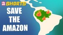 Amazon Forest Fire Explained! | Peekaboo Shorts | Best Learning Videos For Kids | Peekaboo Kidz