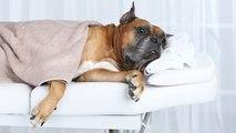 Cómo darle un masaje al perro