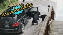 แก๊งหมียกพวกปล้นรถ เปิดประต�