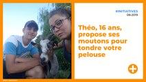 Théo, 16 ans, propose ses moutons pour tondre votre pelouse